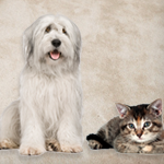 Pet Odor Removal San Antonio