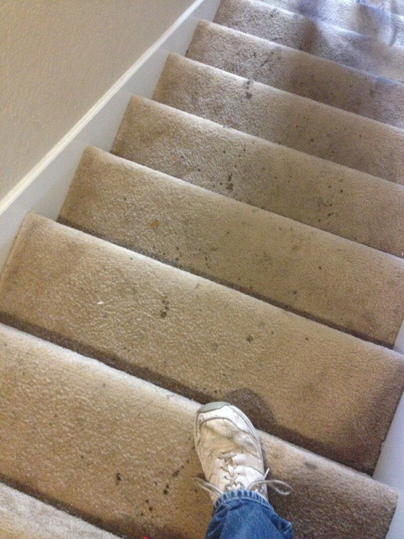 Photos Of Our Work Carpet Cleaning San Antonio Carpet