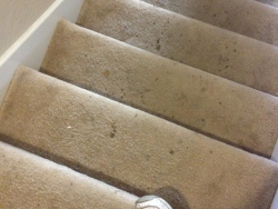 Stairs Dirty Carpet Cleaning San Antonio