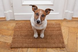 pet stain removal