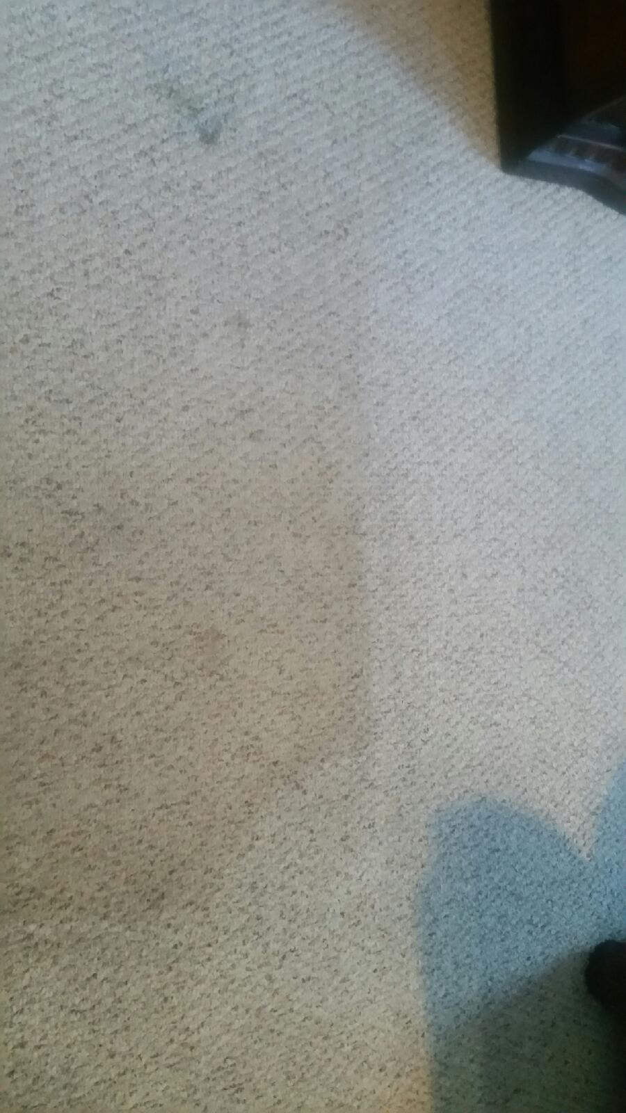 San Antonio Steam Cleaning Vs Dry Cleaning Call 210